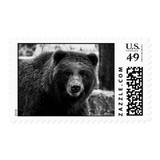 Beautiful Grizzly Bear Photo Stamps