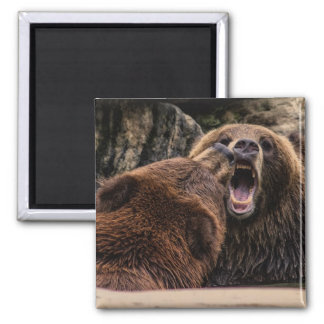 Beautiful Grizzly Bears 2 Inch Square Magnet