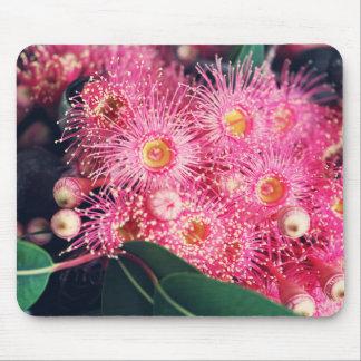 Beautiful Gum Nut Tree Flowers Mouse Pad