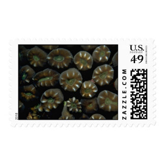 Beautiful Hard coral polyps from Indonesia Postage