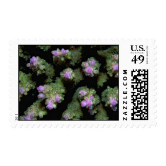 Beautiful Hard coral polyps Stamp