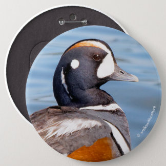 Beautiful Harlequin Duck on the Rock Button