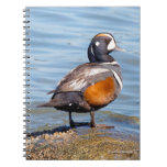 Beautiful Harlequin Duck on the Rock Spiral Notebook