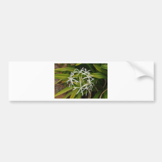 Beautiful Hawaiian flower photo Bumper Sticker