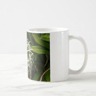 Beautiful Hawaiian flower photo Coffee Mug