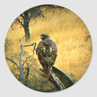 Beautiful Hawk Classic Round Sticker