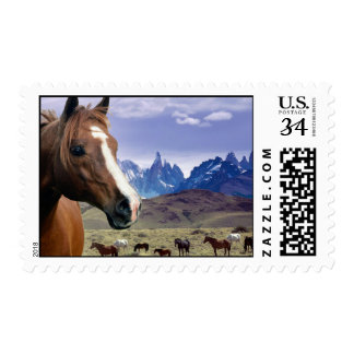Beautiful Heard of Horses in the Wild Postage