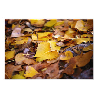 Beautiful heart shaped  leaves grow old photo print