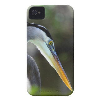 Beautiful Heron iPhone 4 Case-Mate Case