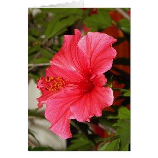 Beautiful Hibiscus Card