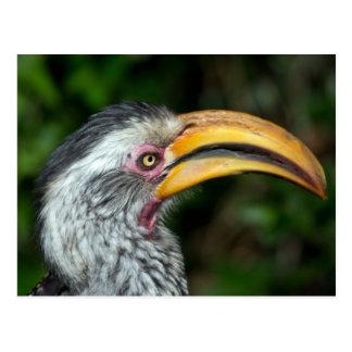 Beautiful hornbill bird side portrait postcard