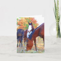 Beautiful Horse Birthday Cards