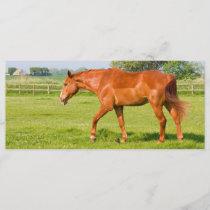 Beautiful horse bookmark, gift idea