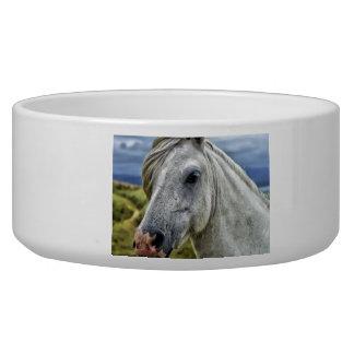 Beautiful Horse Bowl