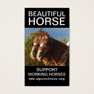 Beautiful Horse Business Card