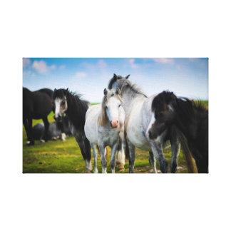 Beautiful Horse Canvas