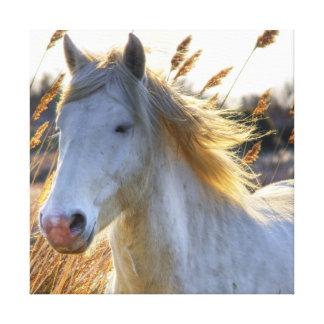 Beautiful Horse Canvas Prints