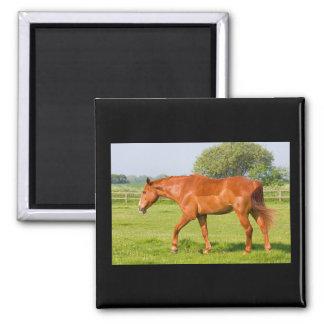 Beautiful horse fridge magnet, gift idea magnet