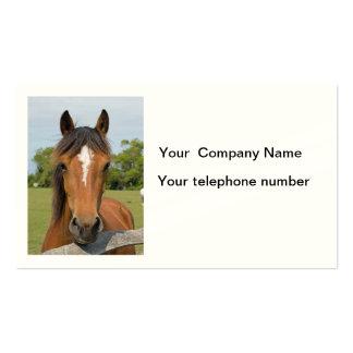 Beautiful horse head chestnut photo business card