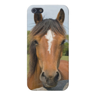 Beautiful horse head chestnut photo iphone 5 case