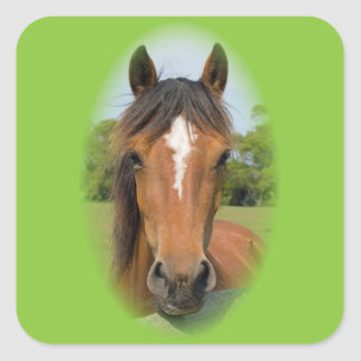 Beautiful horse head chestnut photo stickers