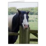 Beautiful Horse head close-up greeting card