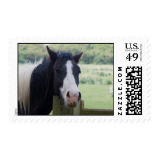 Beautiful Horse head close-up postage stamp