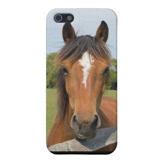 Beautiful horse head iphone 5c case, gift idea iPhone SE/5/5s case