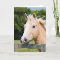 Beautiful horse head palamino blank greetings card