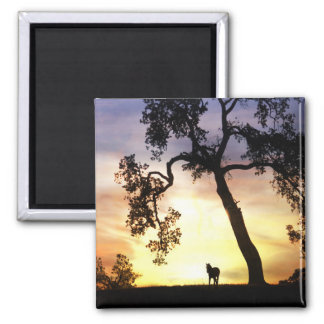 Beautiful Horse in the Sunset Magnet Refrigerator Magnet