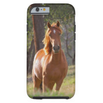 Beautiful Horse iPhone 6 case for Horse Lovers