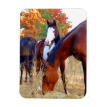 Beautiful Horse Magnets