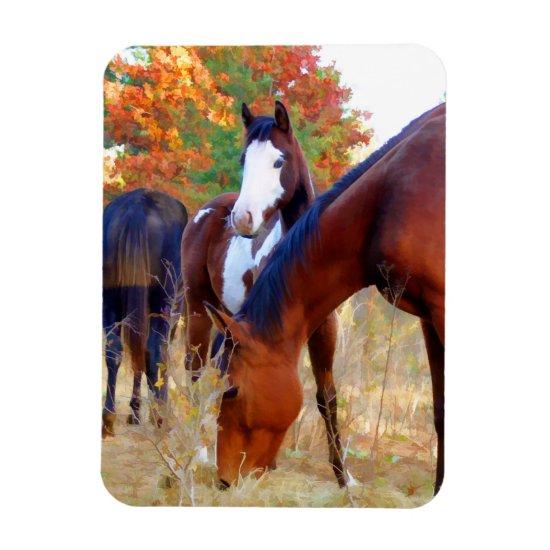 Beautiful Horse Magnets