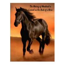 Beautiful Horse On Orange Sunrise Postcard