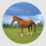 Beautiful horse on the grass on summer day sticker