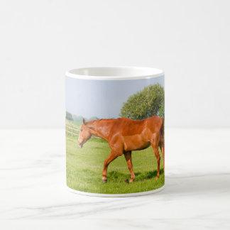 Beautiful horse photo mug, gift idea