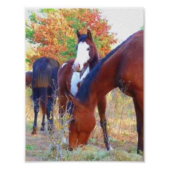 Beautiful Horse Poster