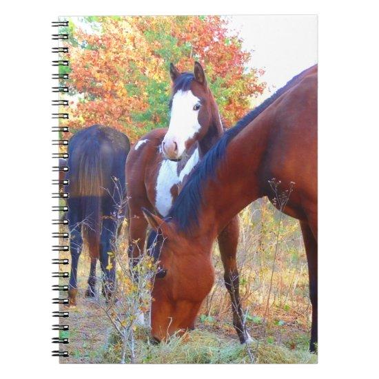 Beautiful Horse Spiral Notebooks
