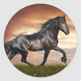 Beautiful Horse Stickers