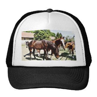 Beautiful Horse Trucker Hat