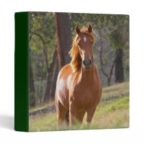 Beautiful Horses 3 Ring Binder