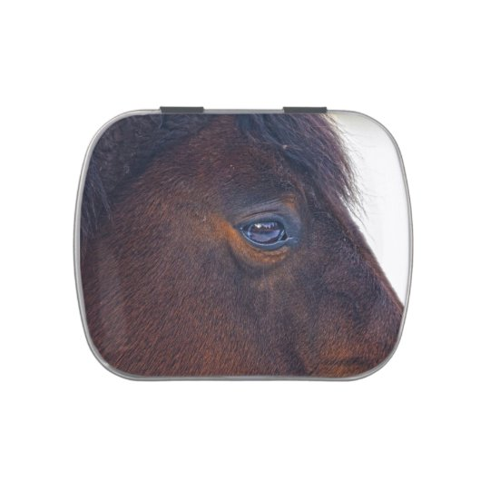 Beautiful Horse's Eye Equine Photo Jelly Belly Tin