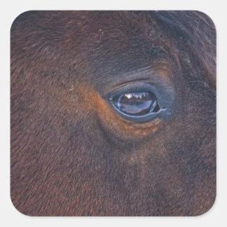 Beautiful Horse's Eye Equine Photo Square Sticker