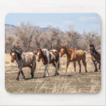 Beautiful Horses in a Pasture Mousepads