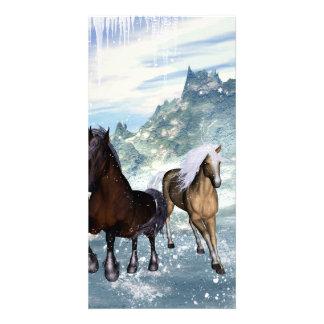 Beautiful horses photo card