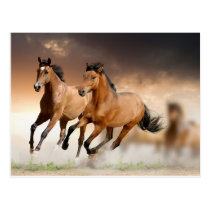 Beautiful horses run on the sunrise postcard