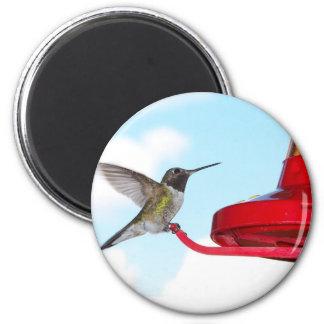 Beautiful Hummingbird and Feeder Magnet