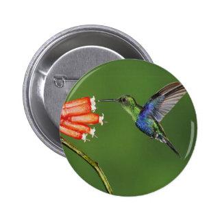 Beautiful Hummingbird Pins