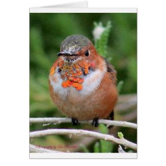 Beautiful Hummingbird Greeting Cards