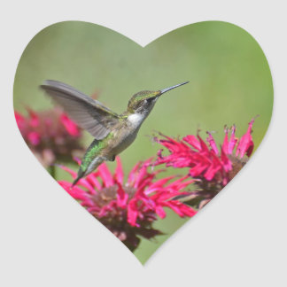 Beautiful hummingbird Hovering Over Red Flowers Heart Sticker